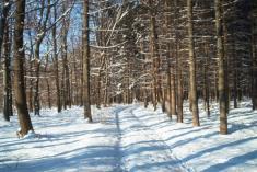 Přírodní park Bílý potok - zimní galerie
