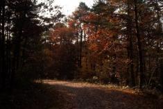 Přírodní park Bílý potok - beze sněhu